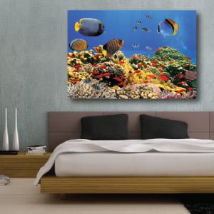 # Πίνακας βυθός με ψάρια - Sticker Box