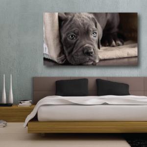# Πίνακας με σκυλάκι - Sticker Box