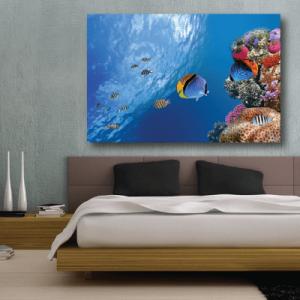 # Πίνακας με ψάρια στο βυθό - Sticker Box