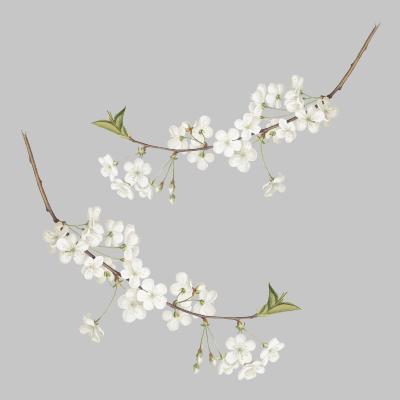 Αυτοκόλλητο τοίχου κλαδία με άσπρα λουλούδια