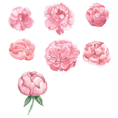 Αυτοκόλλητo με λουλούδια παιώνιες_1